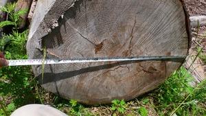 割れの入った木
